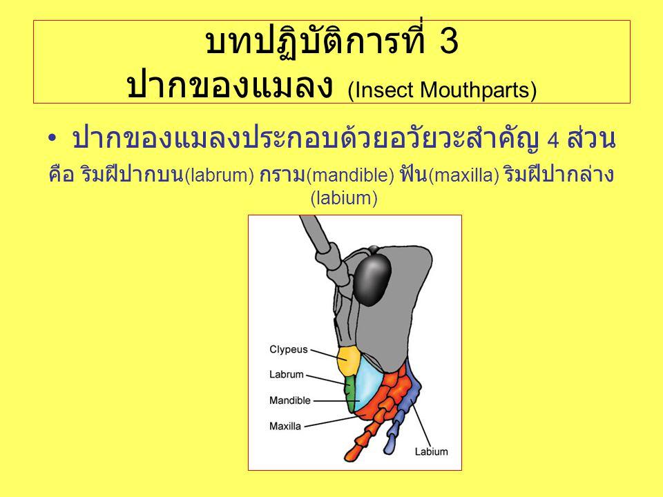 บทปฏิบัติการที่ 3 ปากของแมลง (Insect Mouthparts)