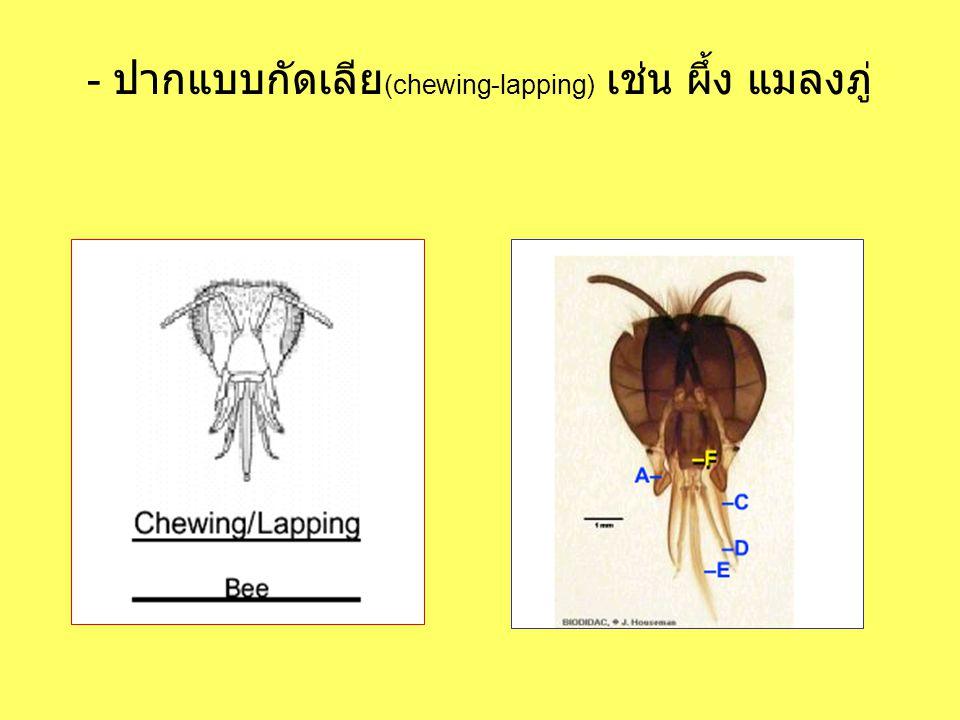 - ปากแบบกัดเลีย(chewing-lapping) เช่น ผึ้ง แมลงภู่