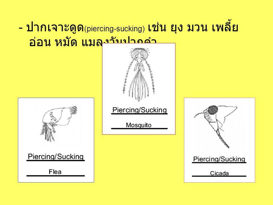 - ปากเจาะดูด(piercing-sucking) เช่น ยุง มวน เพลี้ยอ่อน หมัด แมลงวันปากดำ