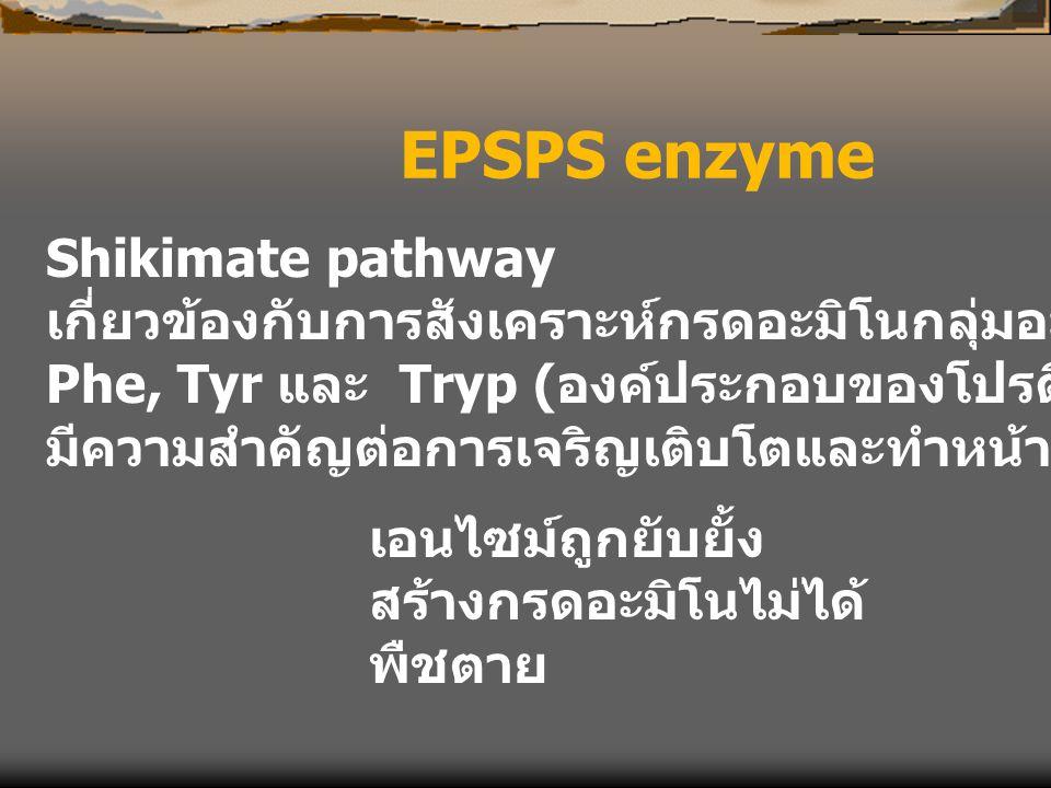EPSPS enzyme Shikimate pathway