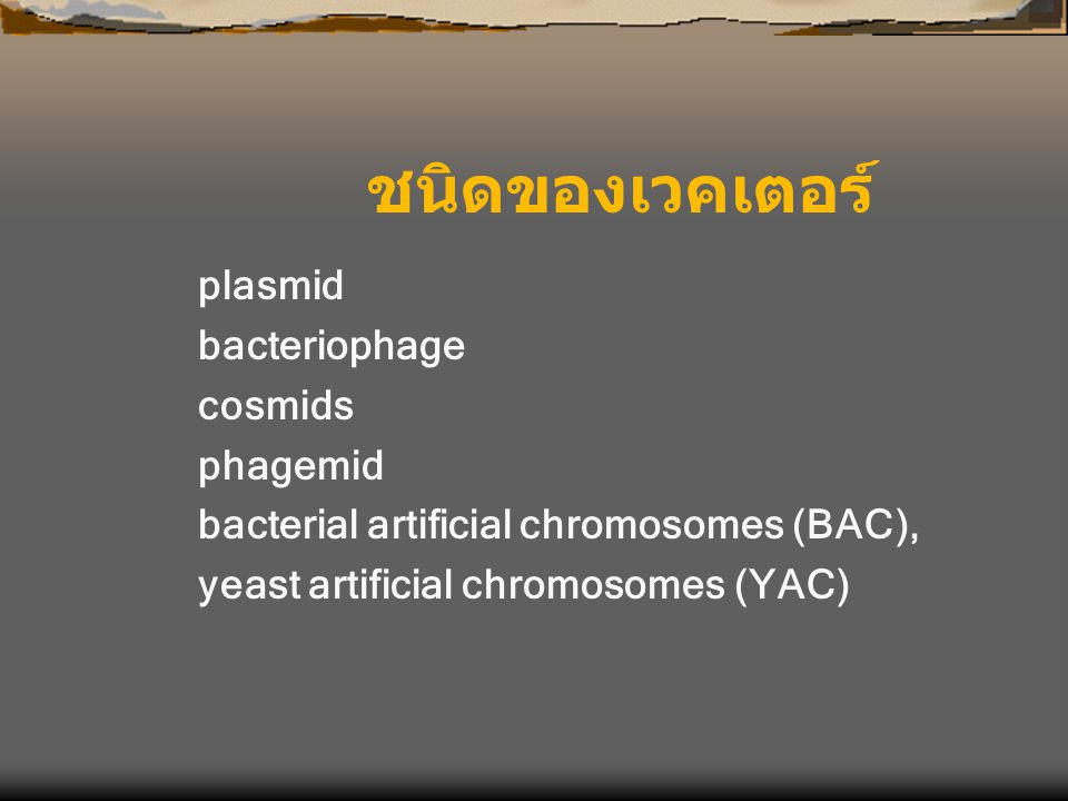 ชนิดของเวคเตอร์ plasmid bacteriophage cosmids phagemid