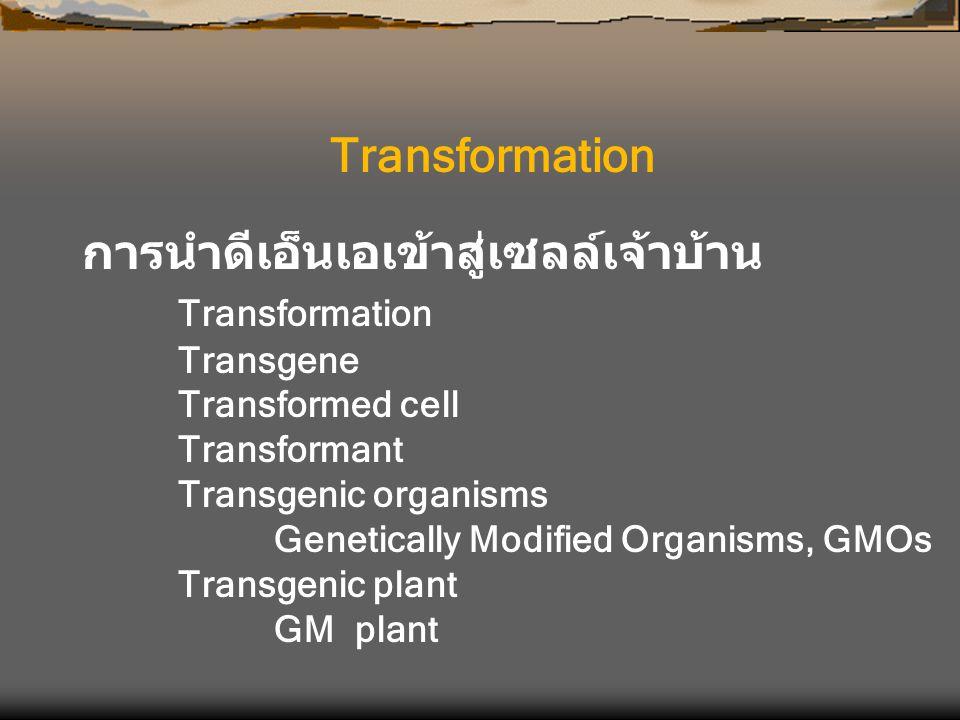 การนำดีเอ็นเอเข้าสู่เซลล์เจ้าบ้าน Transformation