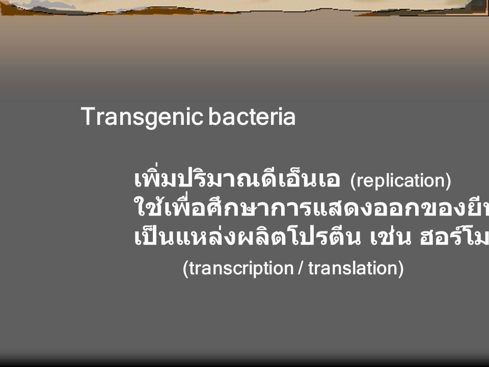 Transgenic bacteria เพิ่มปริมาณดีเอ็นเอ (replication) ใช้เพื่อศึกษาการแสดงออกของยีน. เป็นแหล่งผลิตโปรตีน เช่น ฮอร์โมน หรือ ยา.