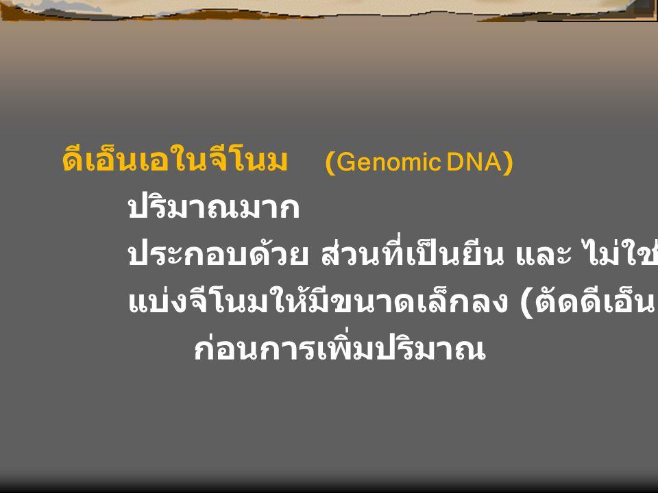 ดีเอ็นเอในจีโนม (Genomic DNA)