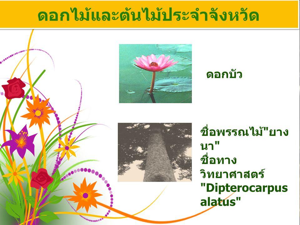 ดอกไม้และต้นไม้ประจำจังหวัด