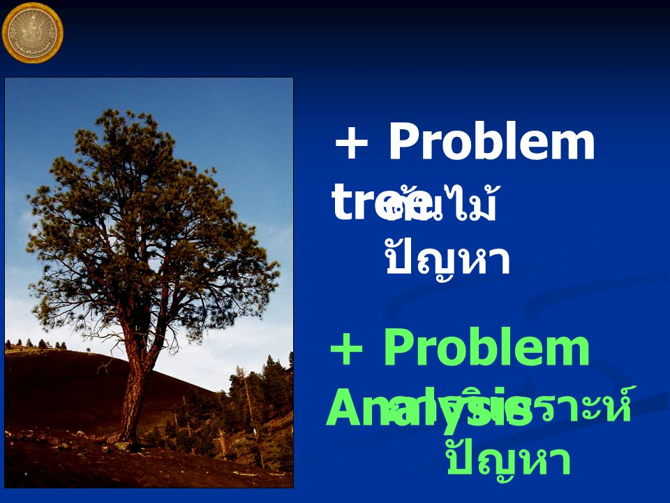 + Problem tree ต้นไม้ปัญหา + Problem Analysis การวิเคราะห์ปัญหา
