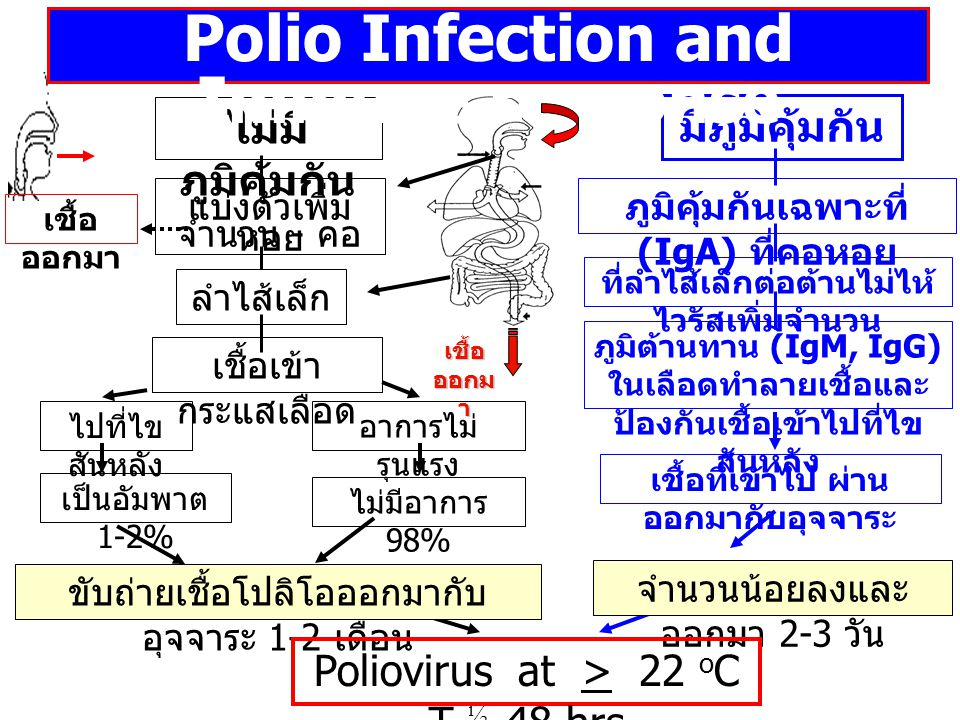 Polio Infection and Immune response