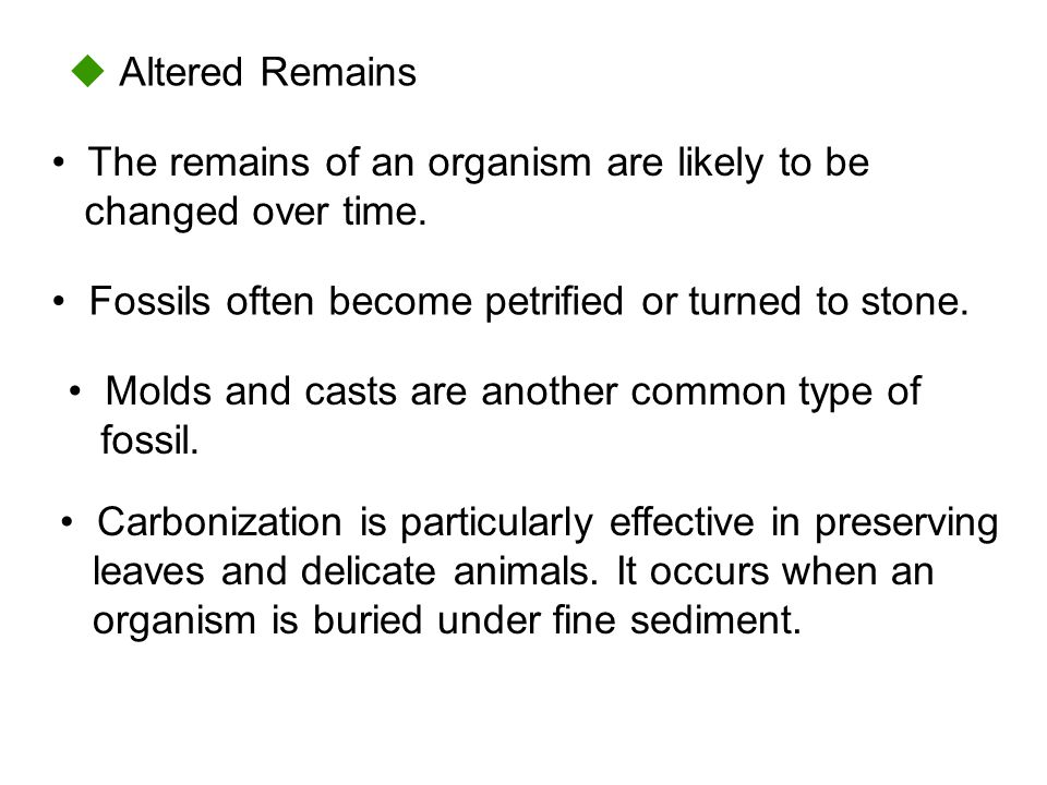  Altered Remains • The remains of an organism are likely to be changed over time. • Fossils often become petrified or turned to stone.