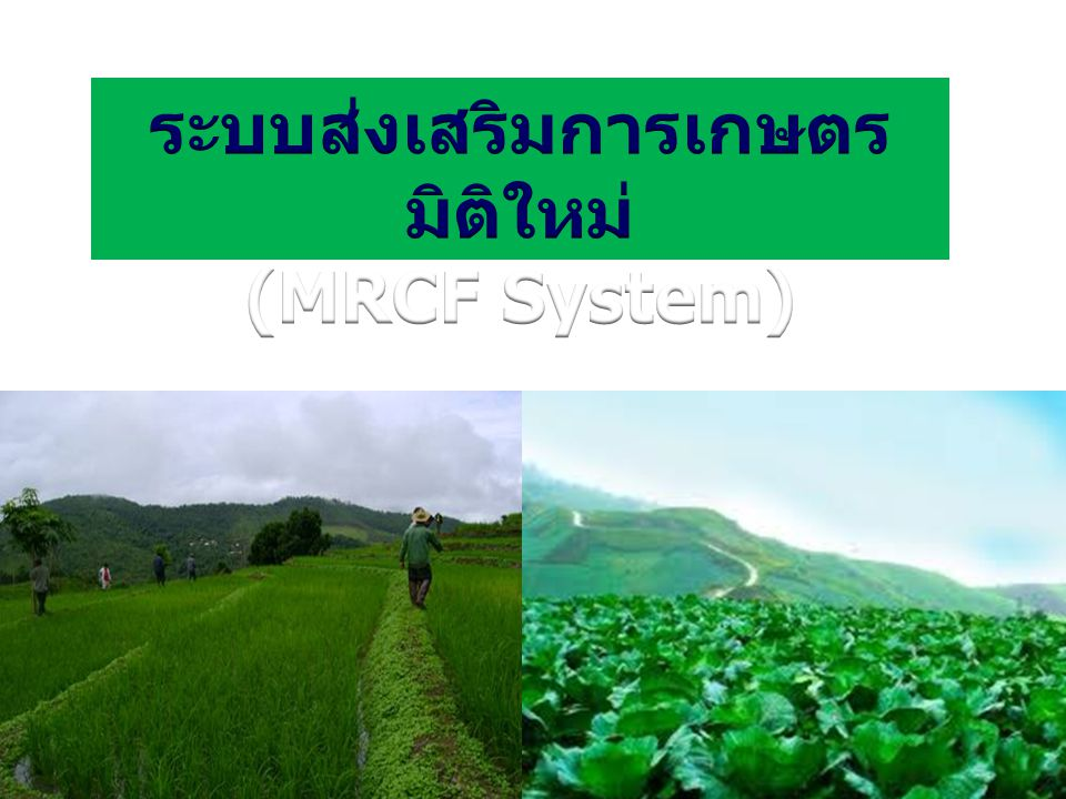 ระบบส่งเสริมการเกษตรมิติใหม่ (MRCF System)