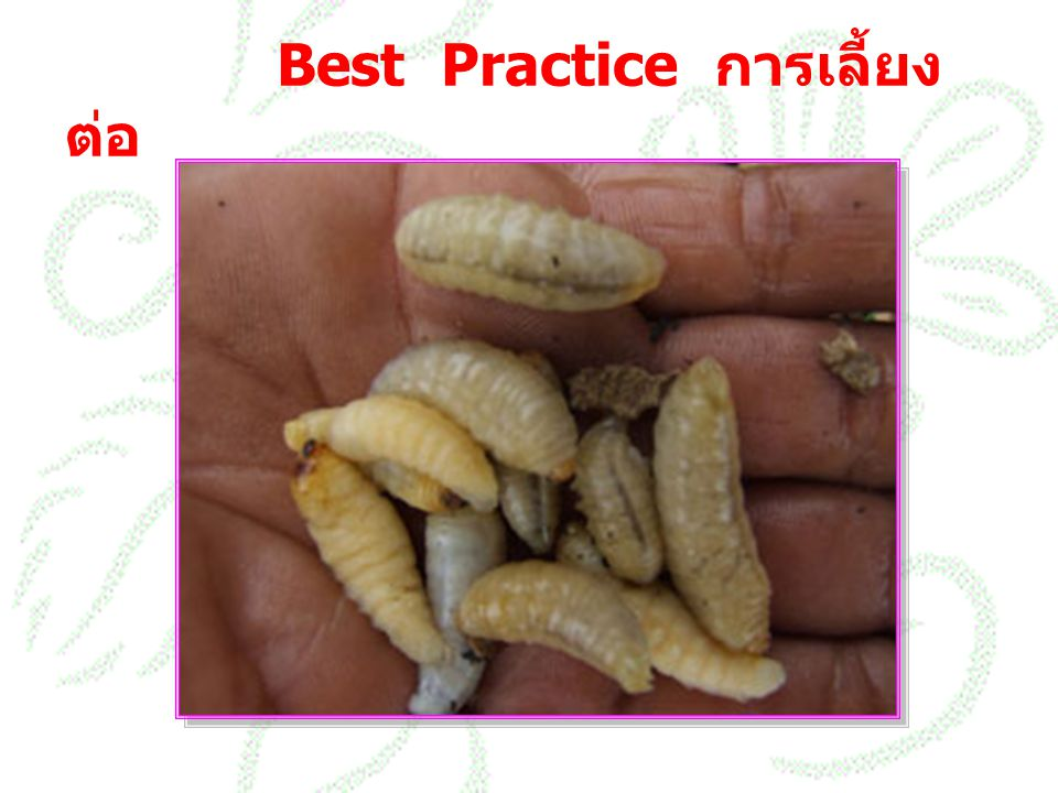 Best Practice การเลี้ยงต่อ