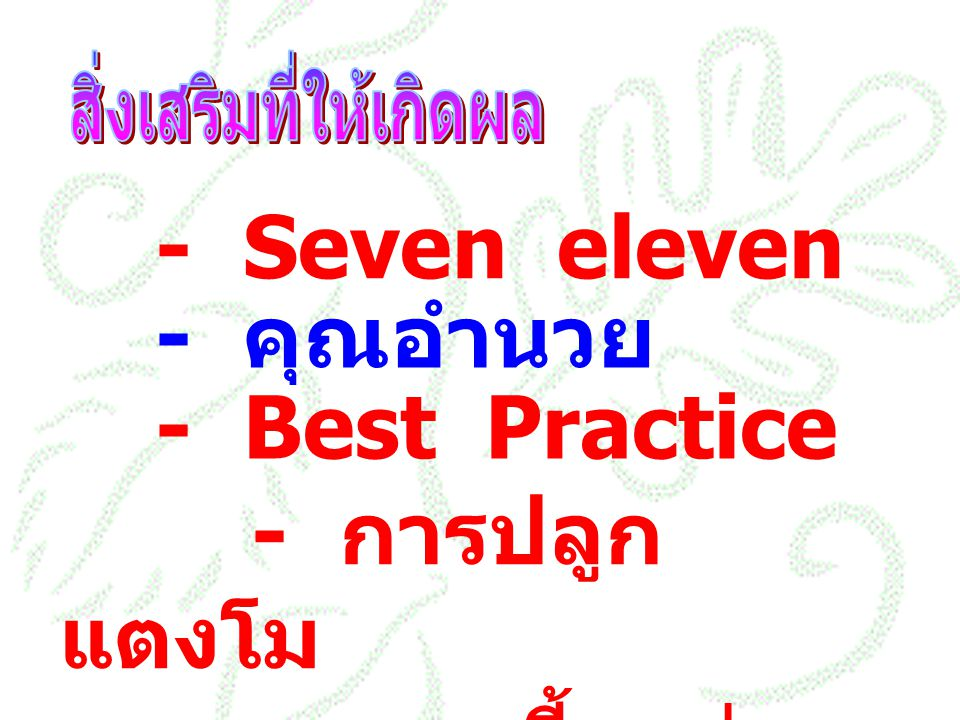 - Seven eleven - คุณอำนวย - Best Practice - การปลูกแตงโม - การเลี้ยงต่อ