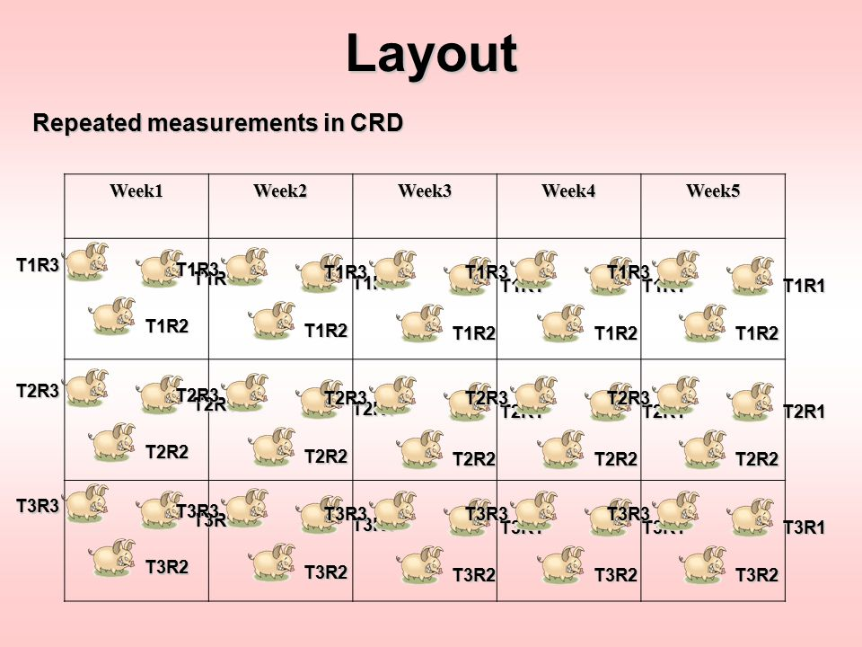 Layout Repeated measurements in CRD Week1 Week2 Week3 Week4 Week5 T1R1