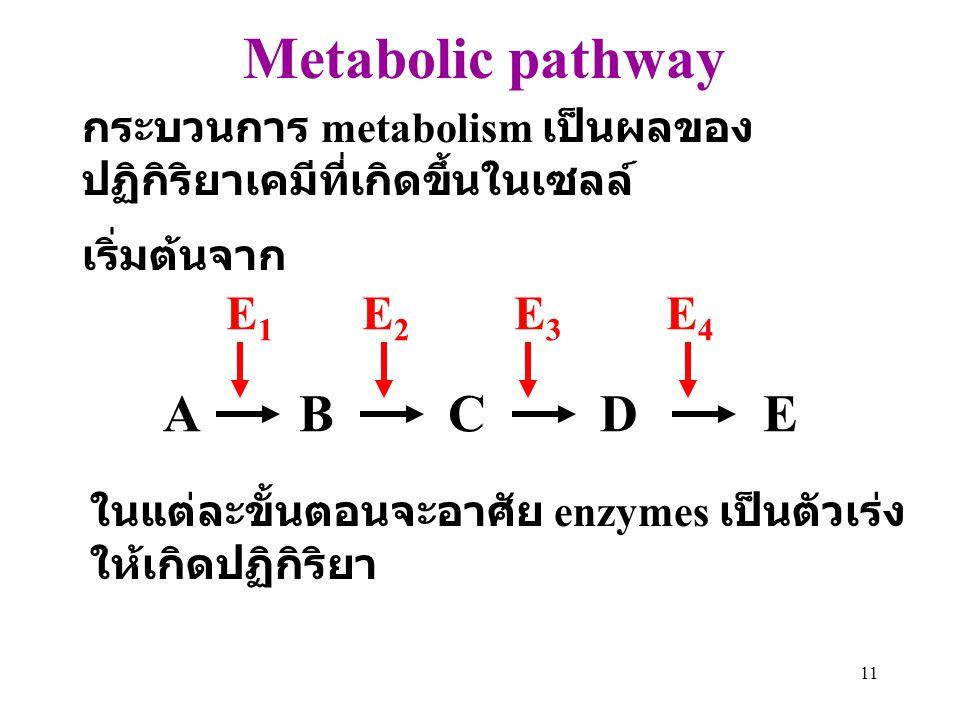 Metabolic pathway A B C D E E1 E2 E3 E4