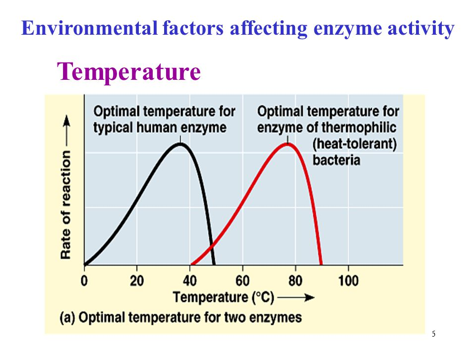 Environmental factors affecting enzyme activity