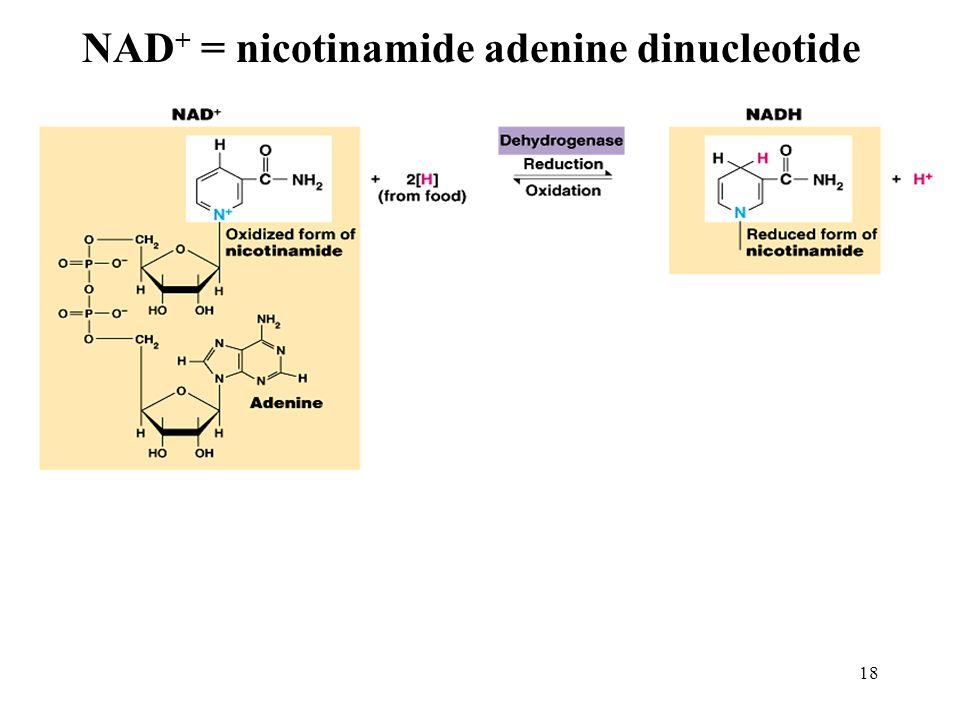 NAD+ = nicotinamide adenine dinucleotide