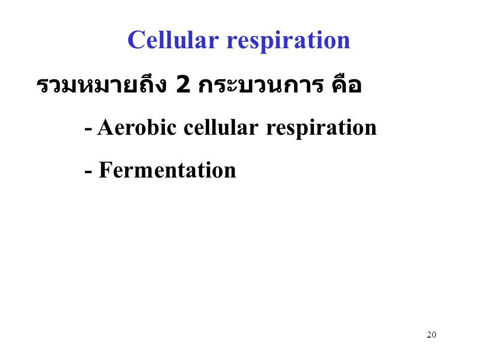 Cellular respiration รวมหมายถึง 2 กระบวนการ คือ