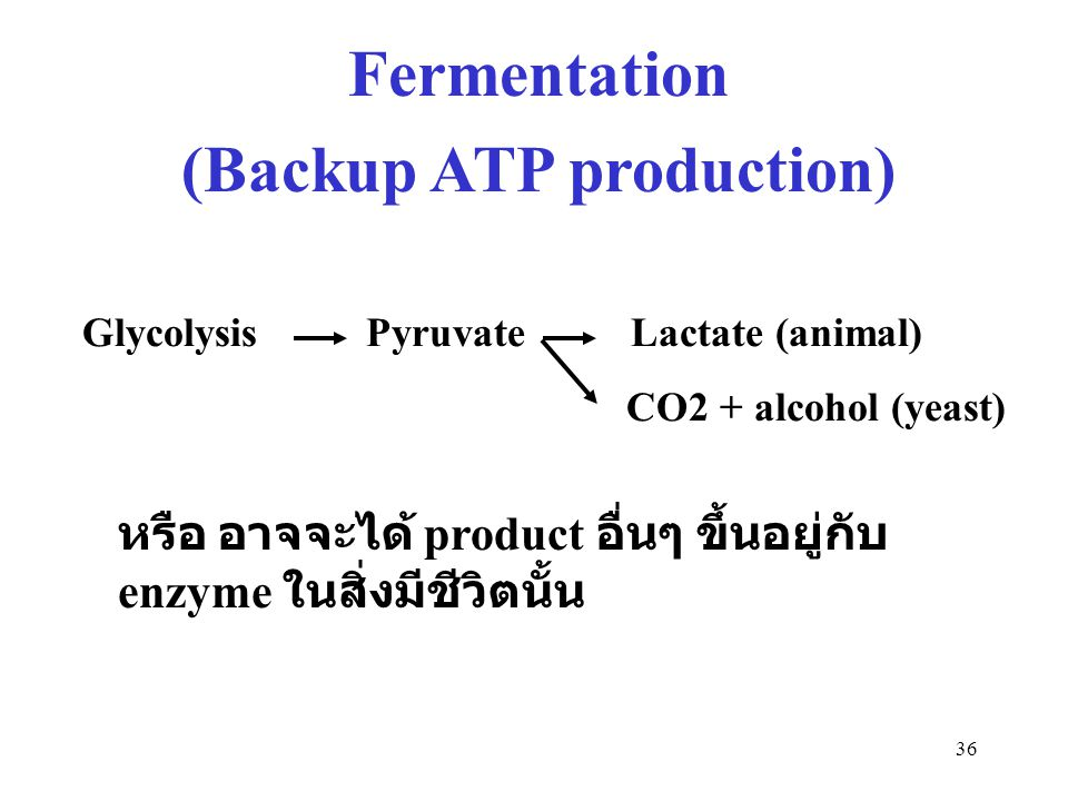 (Backup ATP production)