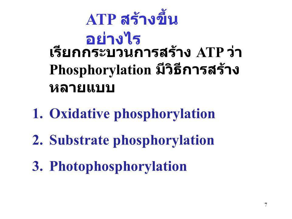 ATP สร้างขึ้นอย่างไร เรียกกระบวนการสร้าง ATP ว่า Phosphorylation มีวิธีการสร้างหลายแบบ. Oxidative phosphorylation.