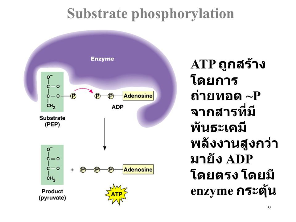 Substrate phosphorylation