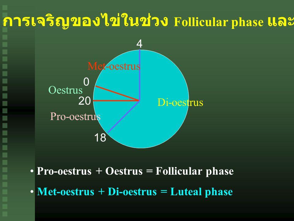 การเจริญของไข่ในช่วง Follicular phase และ Luteal phase