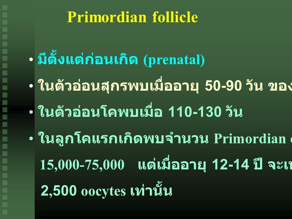 Primordian follicle มีตั้งแต่ก่อนเกิด (prenatal)