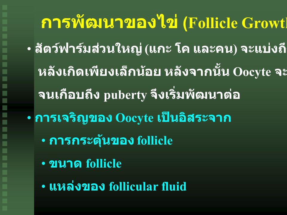 การพัฒนาของไข่ (Follicle Growth)