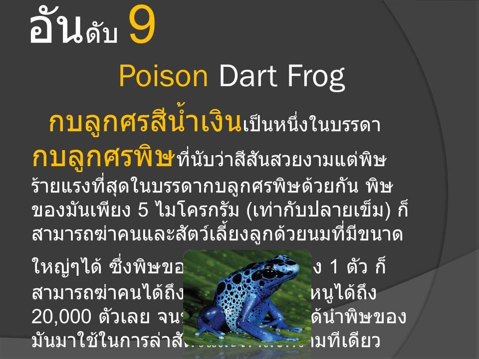 อันดับ 9 Poison Dart Frog