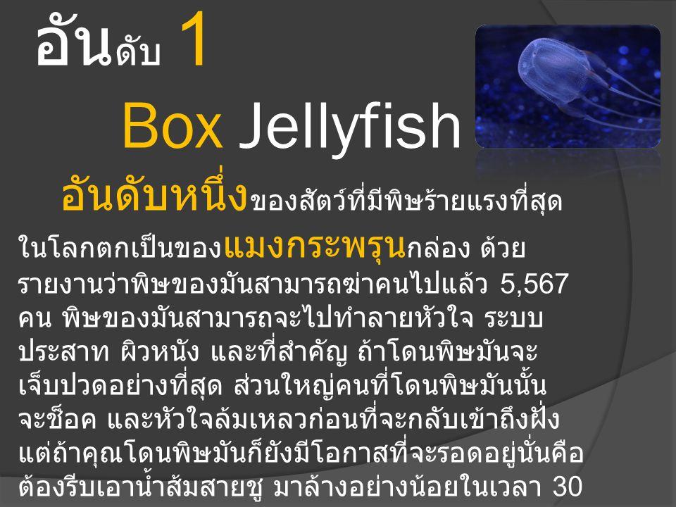 อันดับ 1 Box Jellyfish