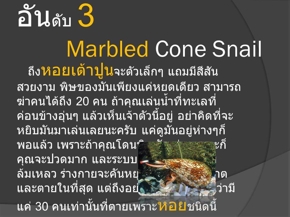 อันดับ 3 Marbled Cone Snail