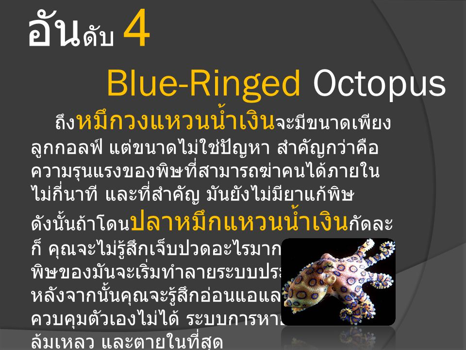 อันดับ 4 Blue-Ringed Octopus