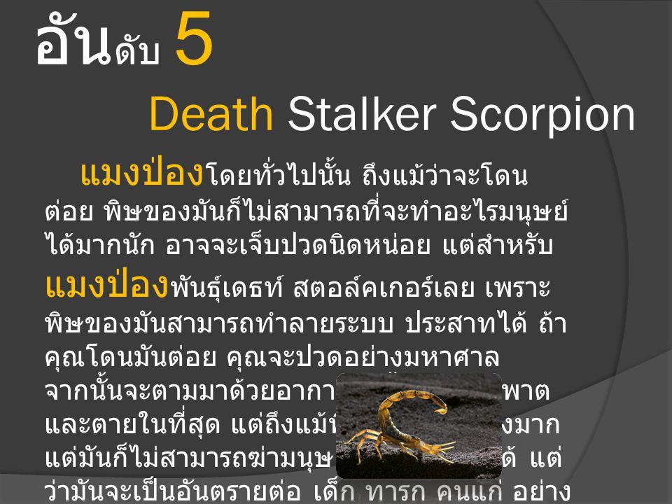 อันดับ 5 Death Stalker Scorpion