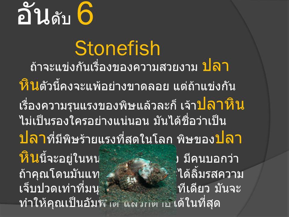 อันดับ 6 Stonefish