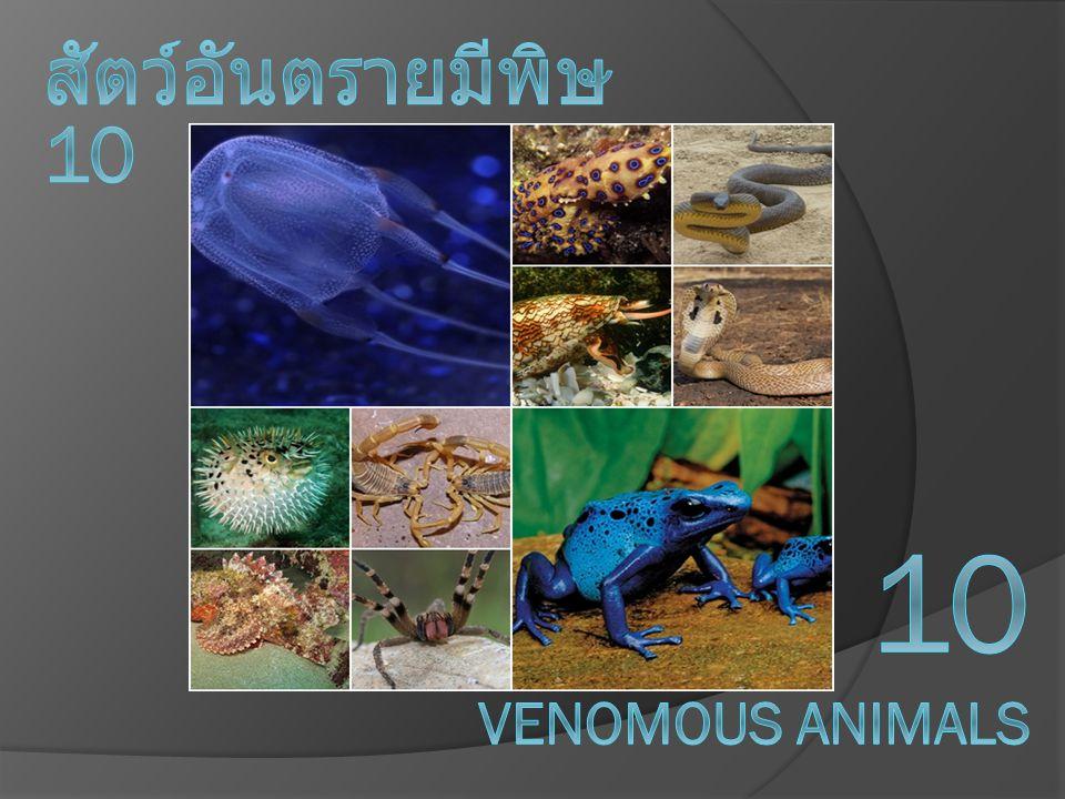 สัตว์อันตรายมีพิษ 10 10 venomous animals