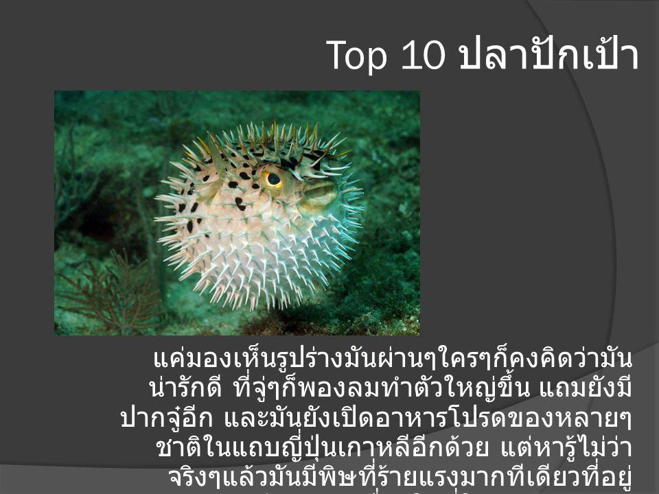 Top 10 ปลาปักเป้า