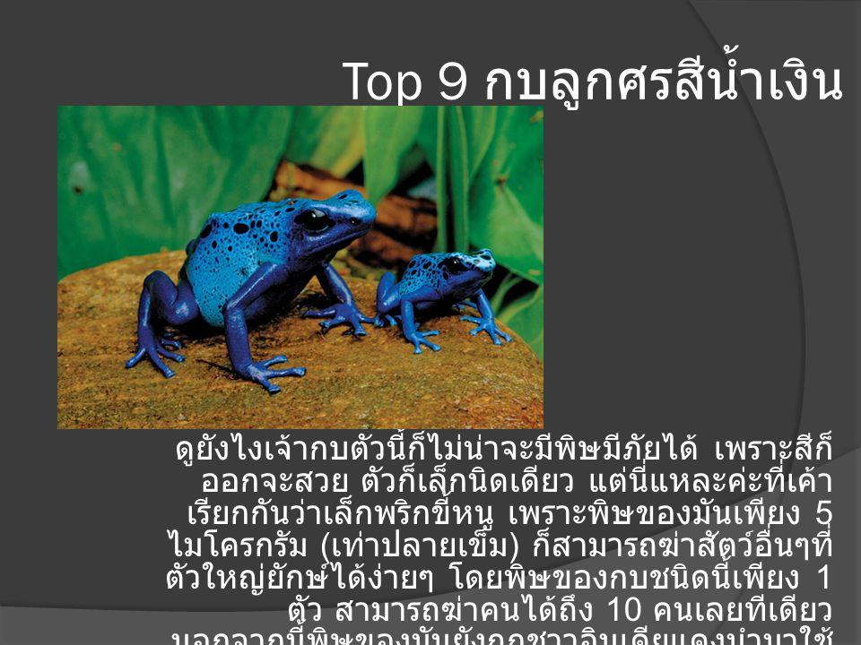 Top 9 กบลูกศรสีน้ำเงิน