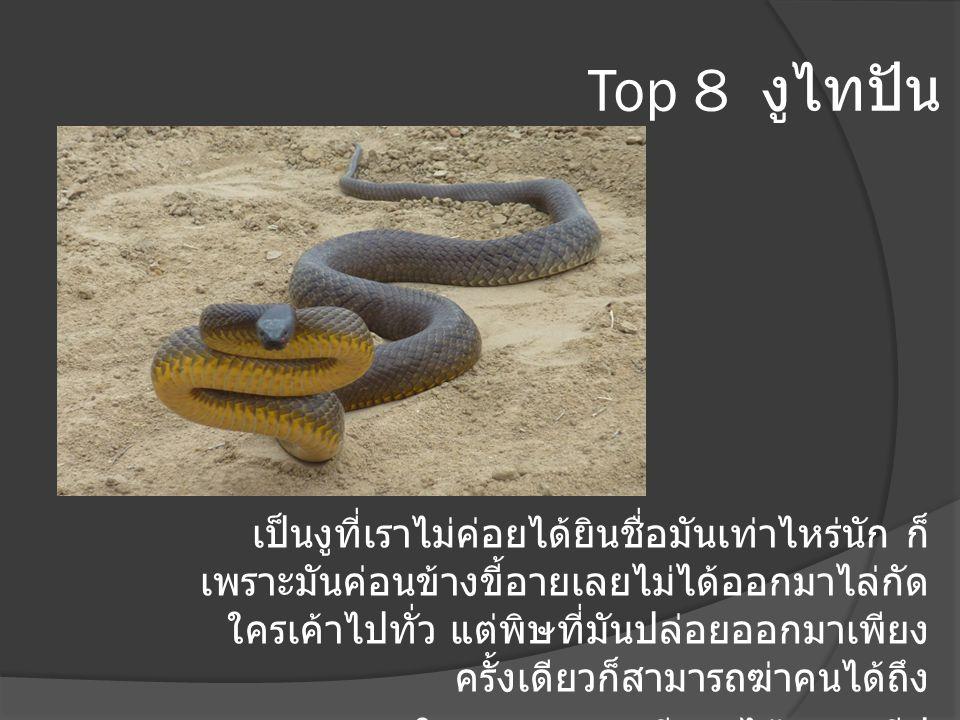 Top 8 งูไทปัน