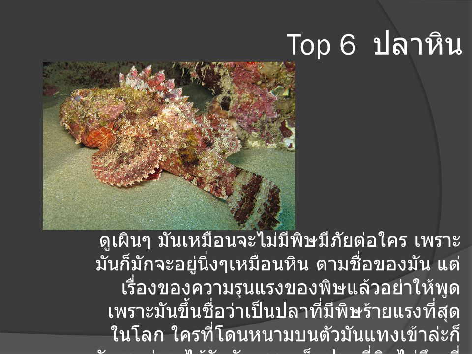 Top 6 ปลาหิน