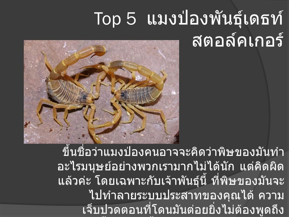 Top 5 แมงป่องพันธุ์เดธท์ สตอล์คเกอร์
