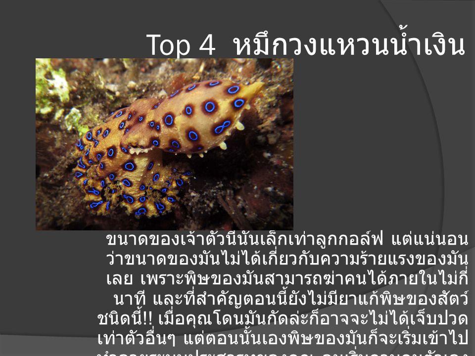 Top 4 หมึกวงแหวนน้ำเงิน