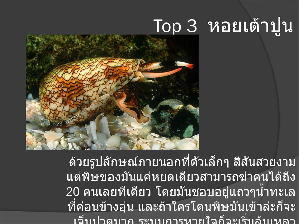 Top 3 หอยเต้าปูน