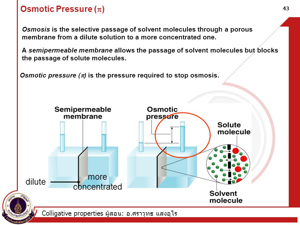Osmotic Pressure (p) more concentrated dilute