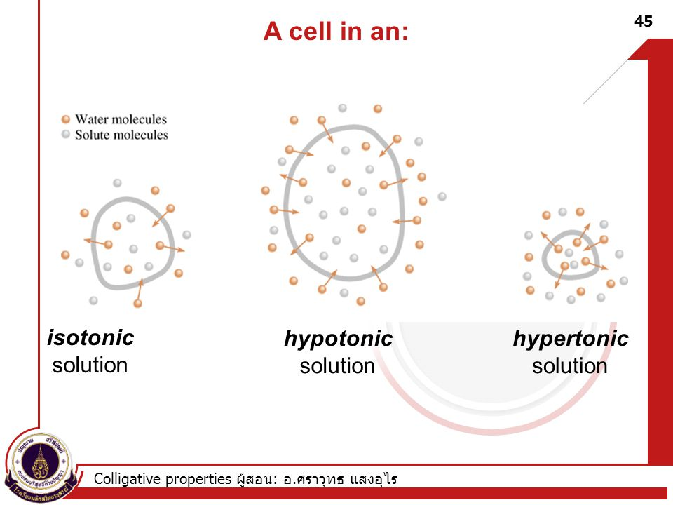 A cell in an: isotonic solution hypotonic solution hypertonic solution