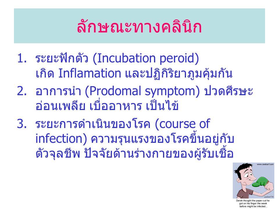 ลักษณะทางคลินิก ระยะฟักตัว (Incubation peroid) เกิด Inflamation และปฏิกิริยาภูมคุ้มกัน.