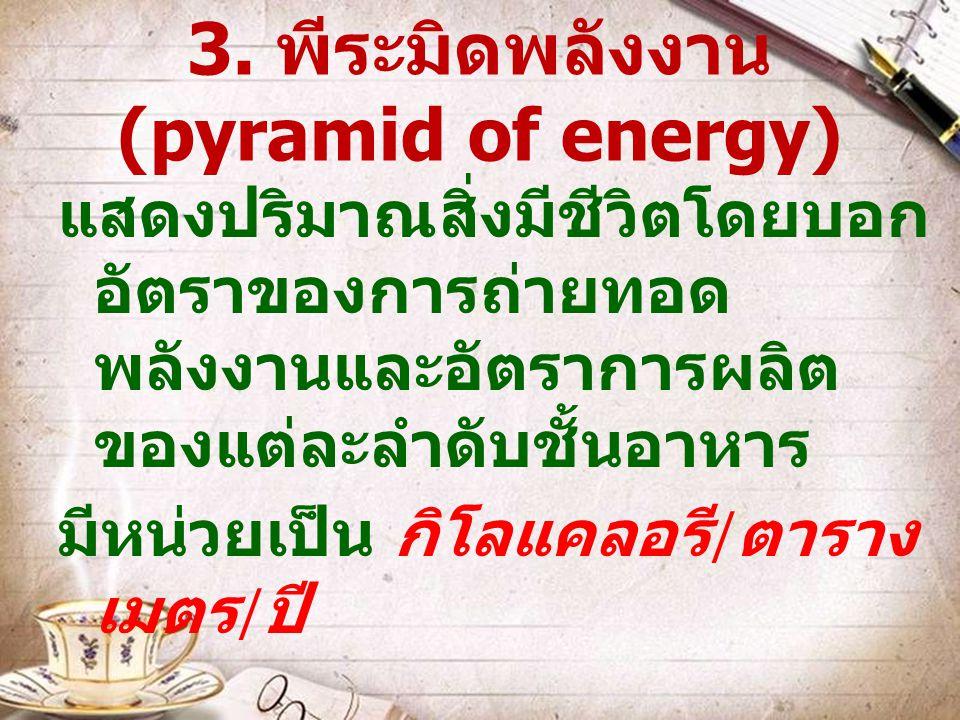 3. พีระมิดพลังงาน (pyramid of energy)