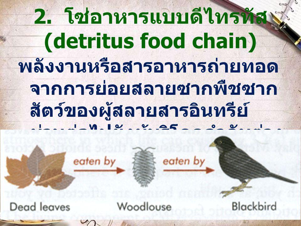 2. โซ่อาหารแบบดีไทรทัส (detritus food chain)