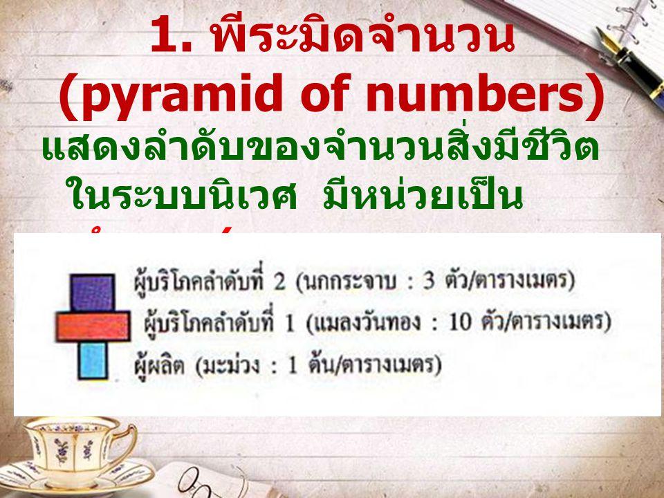 1. พีระมิดจำนวน (pyramid of numbers)