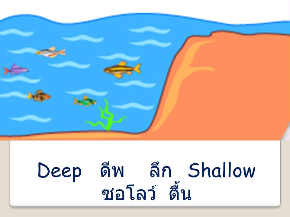 Deep ดีพ ลึก Shallow ซอโลว์ ตื้น