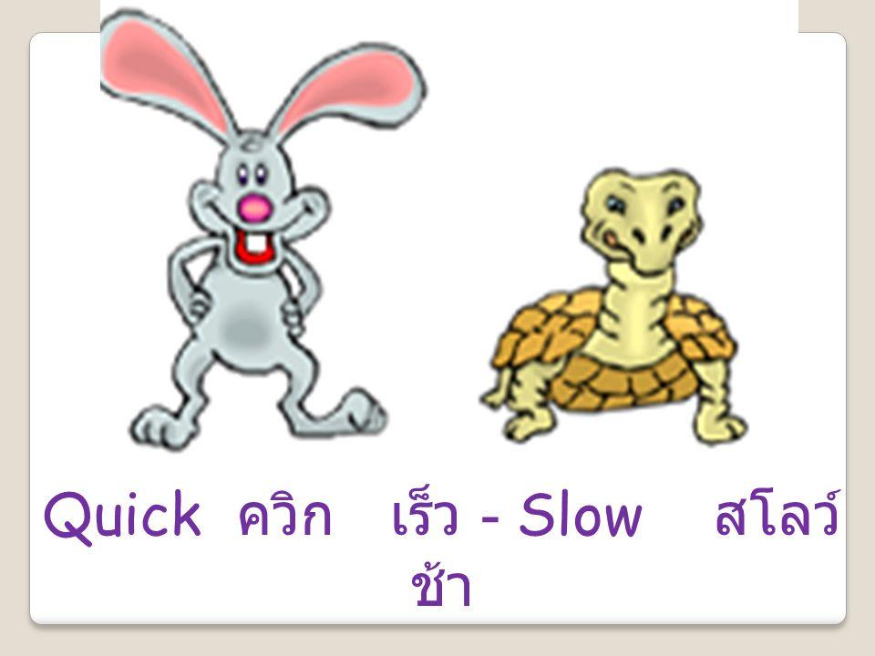 Quick ควิก เร็ว - Slow สโลว์ ช้า
