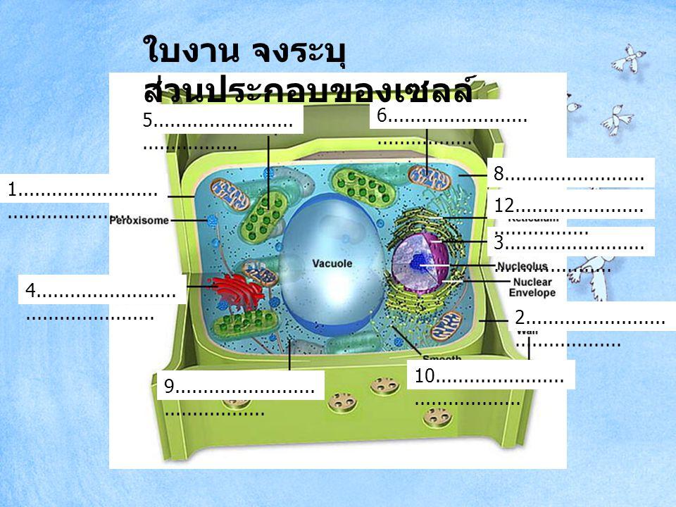 ใบงาน จงระบุส่วนประกอบของเซลล์