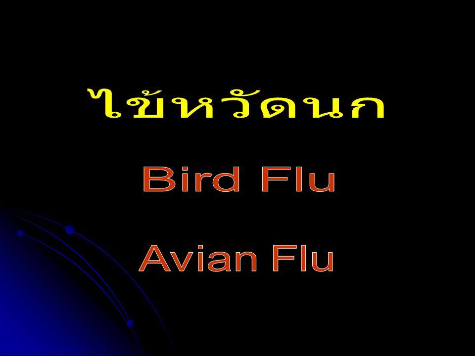ไข้หวัดนก Bird Flu Avian Flu